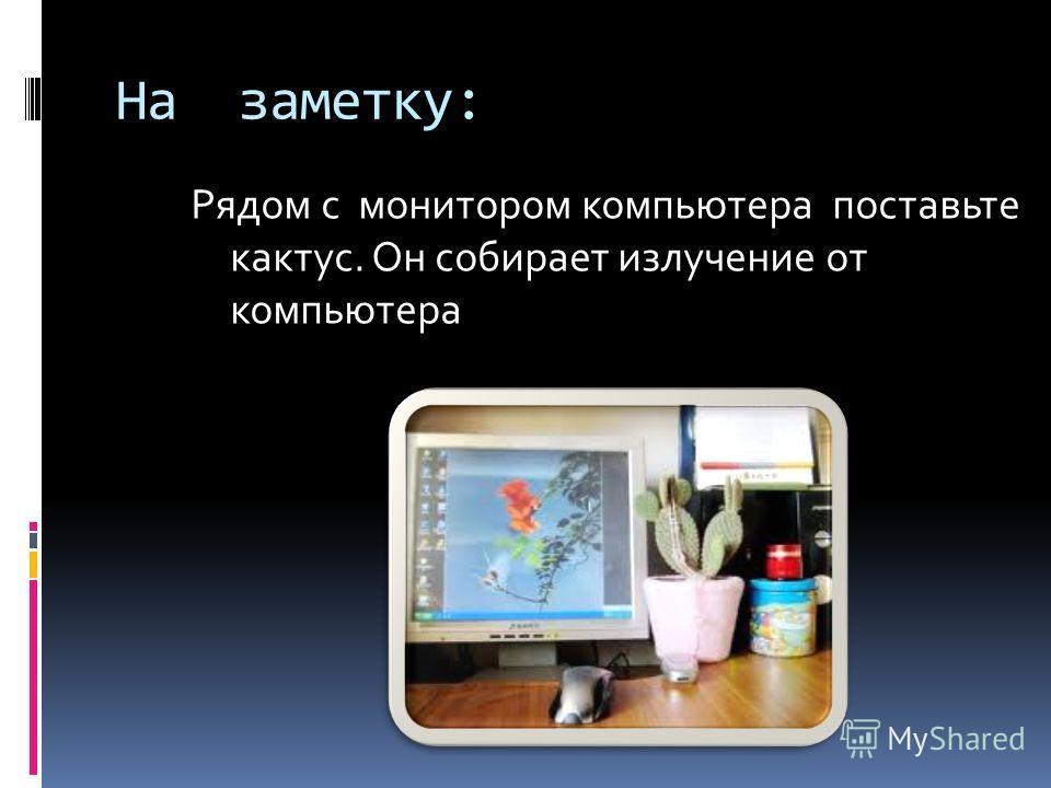 На заметку: Рядом с монитором компьютера поставьте кактус. Он собирает излучение от компьютера