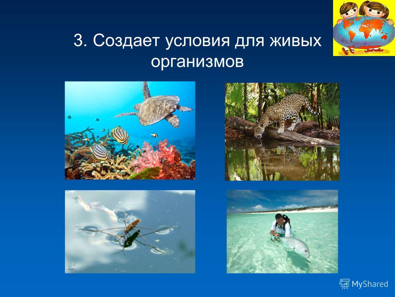 3. Создает условия для живых организмов