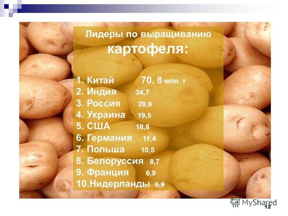 12 Лидеры по выращиванию картофеля: 1. Китай 70, 8 млн. т 2. Индия 34,7 3. Россия 28,9 4. Украина 19,5 5. США 18,8 6. Германия 11,4 7. Польша 10,5 8. Белоруссия 8,7 9. Франция 6,9 10. Нидерланды 6,9