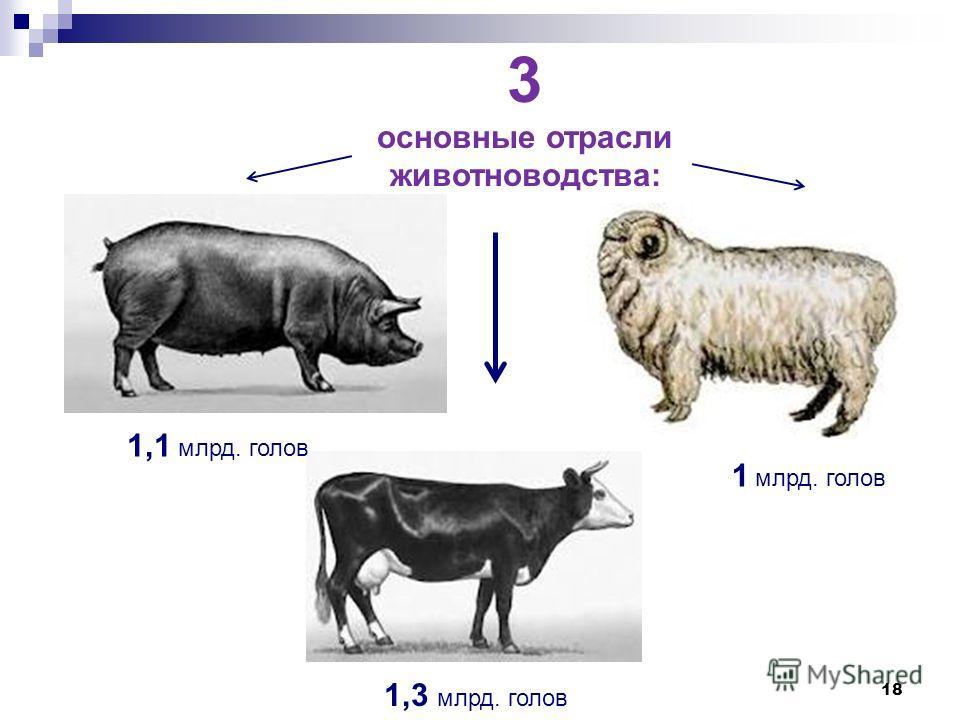 18 3 основные отрасли животноводства: 1,3 млрд. голов 1,1 млрд. голов 1 млрд. голов