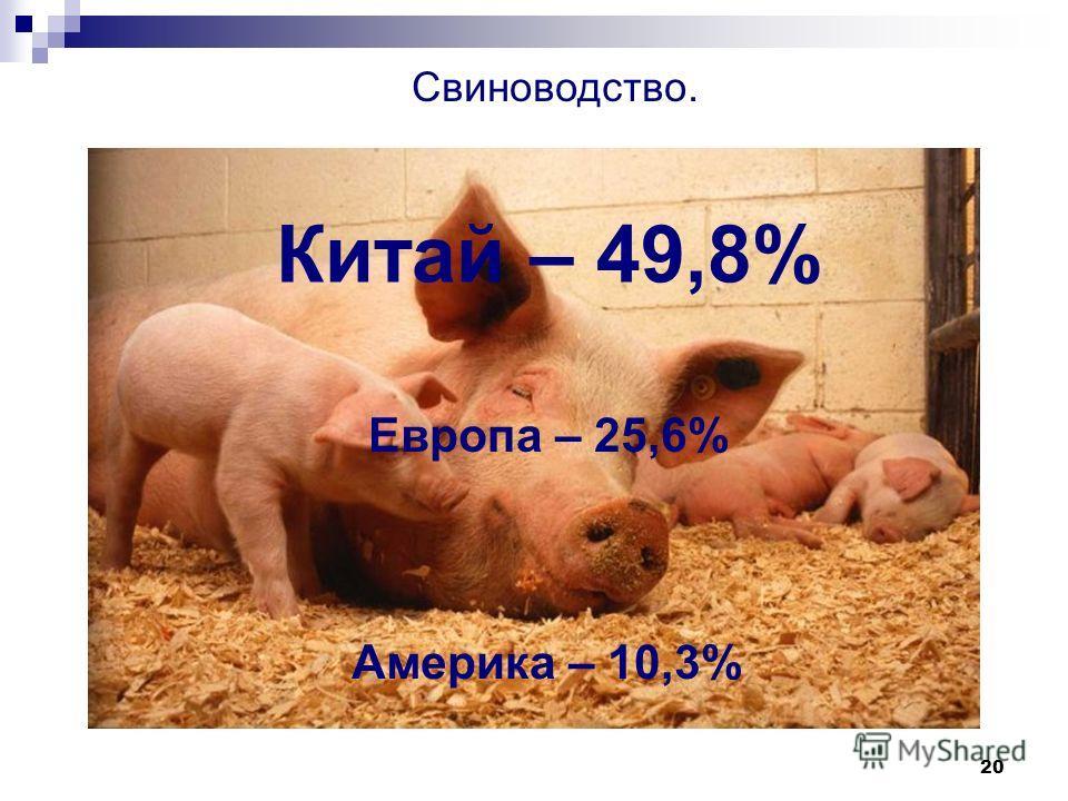 20 Свиноводство. Китай – 49,8% Европа – 25,6% Америка – 10,3%