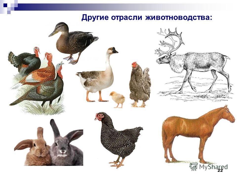 22 Другие отрасли животноводства: