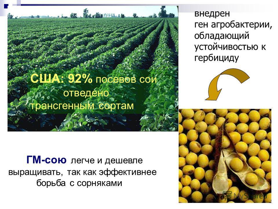 7 ГМ-сою легче и дешевле выращивать, так как эффективнее борьба с сорняками США: 92% посевов сои отведено трансгенным сортам внедрен ген агробактерии, обладающий устойчивостью к гербициду