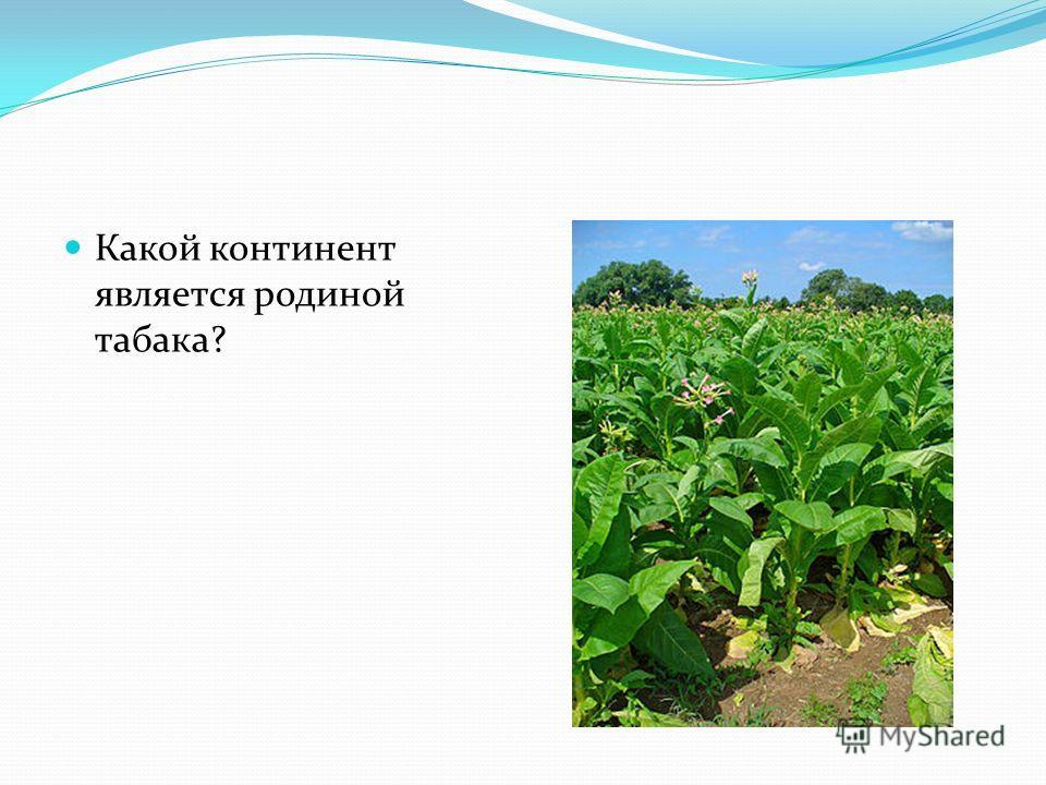 Какой континент является родиной табака?