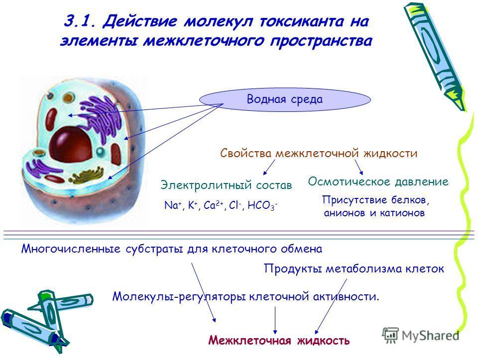 3.1. Действие молекул токсиканта на элементы межклеточного пространства Водная среда Свойства межклеточной жидкости Электролитный состав Осмотическое давление Na +, K +, Са 2+, Cl -, HCO 3 - Присутствие белков, анионов и катионов Межклеточная жидкост