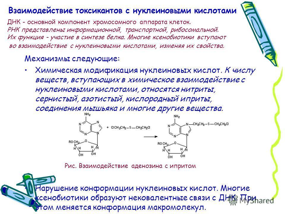Взаимодействие токсикантов с нуклеиновыми кислотами Механизмы следующие: Химическая модификация нуклеиновых кислот. К числу веществ, вступающих в химическое взаимодействие с нуклеиновыми кислотами, относятся нитриты, сернистый, азотистый, кислородный