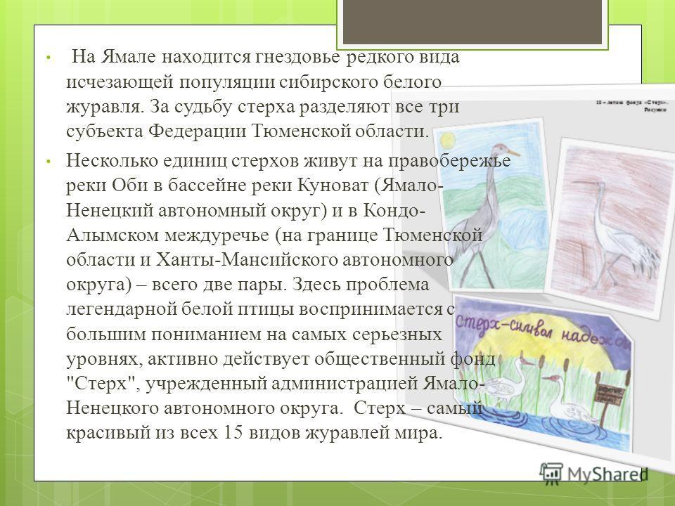 На Ямале находится гнездовье редкого вида исчезающей популяции сибирского белого журавля. За судьбу стерха разделяют все три субъекта Федерации Тюменской области. Несколько единиц стерхов живут на правобережье реки Оби в бассейне реки Куноват (Ямало-