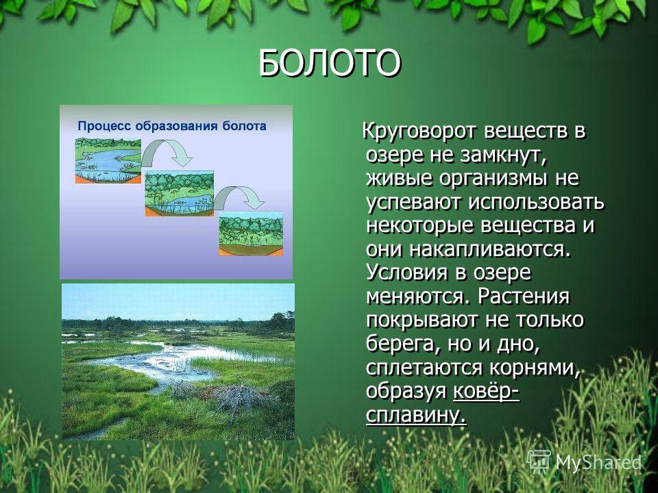 БОЛОТО Круговорот веществ в озере не замкнут, живые организмы не успевают использовать некоторые вещества и они накапливаются. Условия в озере меняются. Растения покрывают не только берега, но и дно, сплетаются корнями, образуя ковёр- сплавину.