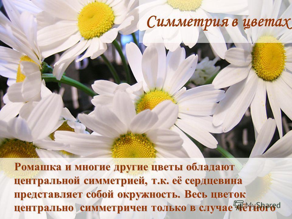 Ромашка и многие другие цветы обладают центральной симметрией, т.к. её сердцевина представляет собой окружность. Весь цветок центрально симметричен только в случае чётного количества лепестков. Ромашка и многие другие цветы обладают центральной симме