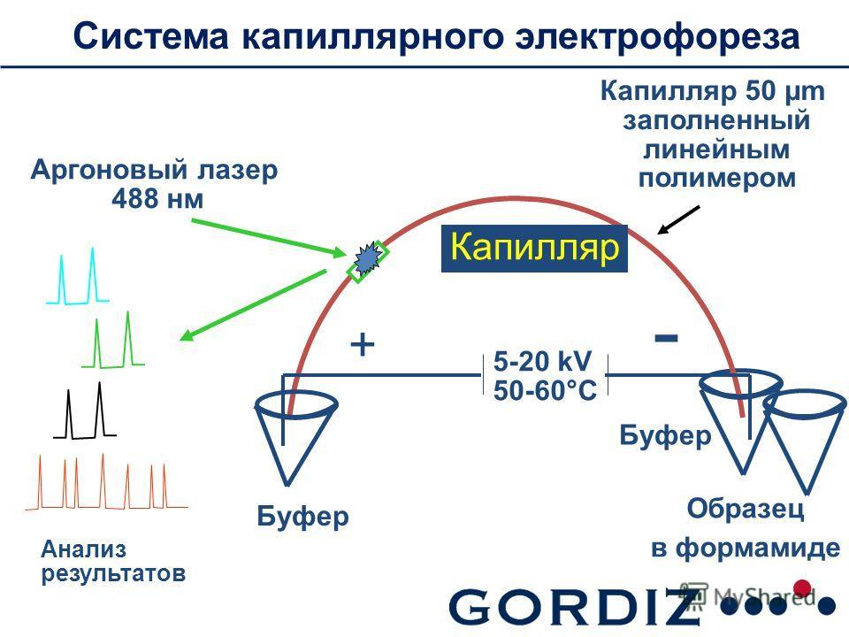Система ккапиллярного электрофореза Буфер Аргоновый лазер 488 нм Анализ результатов Капилляр 50 µm заполненный линейным полимером Буфер Образец в формамиде 5-20 kV 50-60°С Капилляр + -