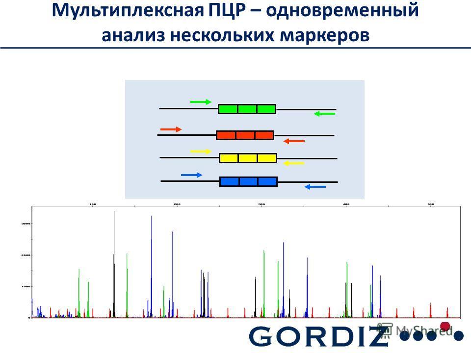 Мультиплексная ПЦР – одновременный анализ нескольких маркеров