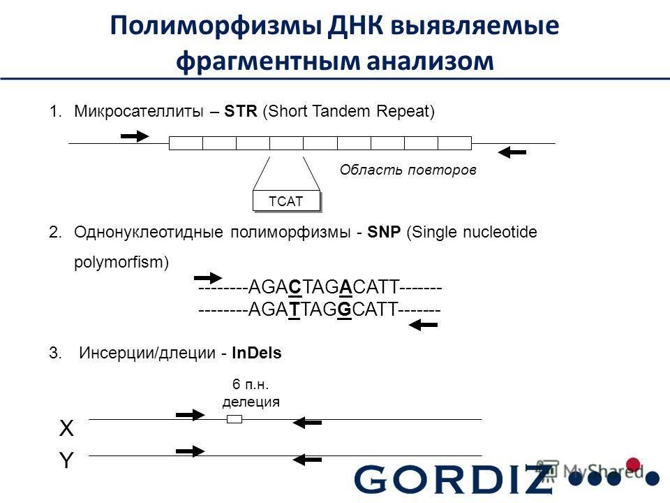 Полиморфизмы ДНК выявляемые фрагментным анализом 1. Микросателлиты – STR (Short Tandem Repeat) 2. Однонуклеотидные полиморфизмы - SNP (Single nucleotide polymorfism) 3. Инсерции/делеции - InDels X Y 6 п.н. делеция TCAT Область повторов --------AGACTA