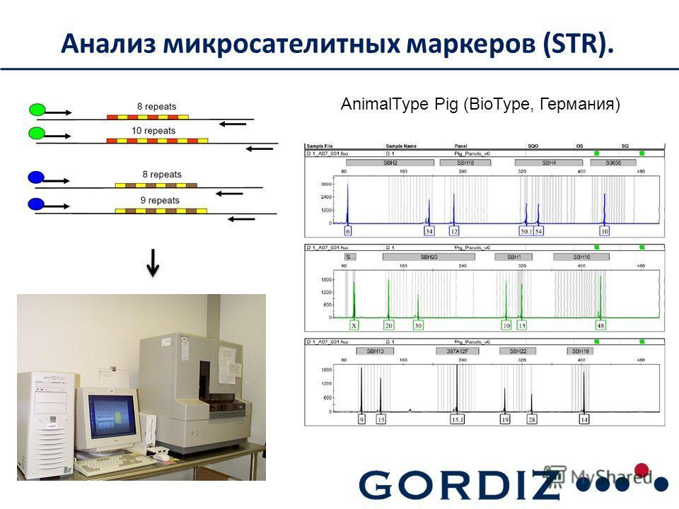 Анализ микросателитных маркеров (STR). AnimalType Pig (BioType, Германия)