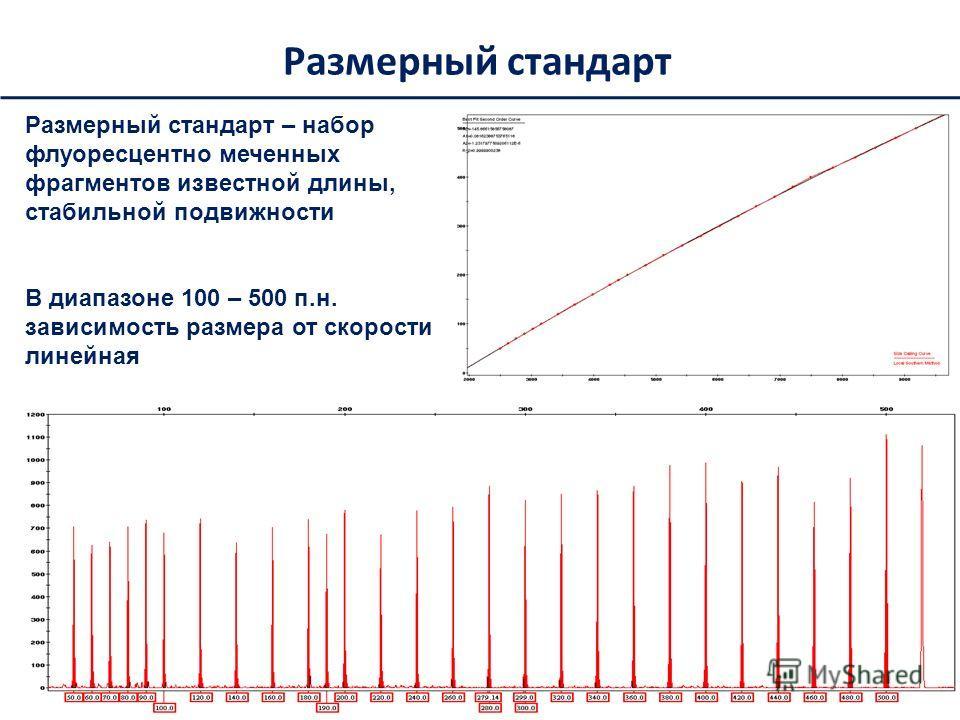 Размерный стандарт Размерный стандарт – набор флуоресцентно меченных фрагментов известной длины, стабильной подвижности В диапазоне 100 – 500 п.н. зависимость размера от скорости линейная
