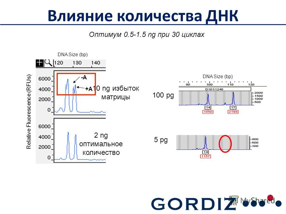 Влияние количества ДНК -A +A 10 ng избыток матрицы 2 ng оптимальное количество DNA Size (bp) Relative Fluorescence (RFUs) 100 pg 5 pg DNA Size (bp) Оптимум 0.5-1.5 ng при 30 циклах