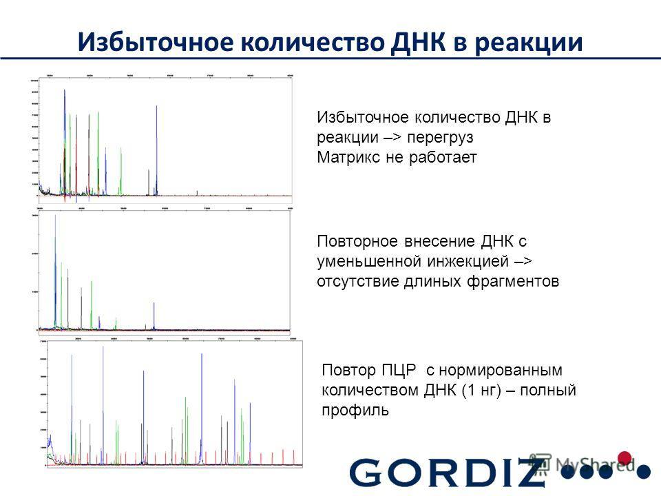 Избыточное количество ДНК в реакции Повтор ПЦР с нормированным количеством ДНК (1 нк) – полный профиль Избыточное количество ДНК в реакции –> перегруз Матрикс не работает Повторное внесение ДНК с уменьшенной инжекцией –> отсутствие длинных фрагментов
