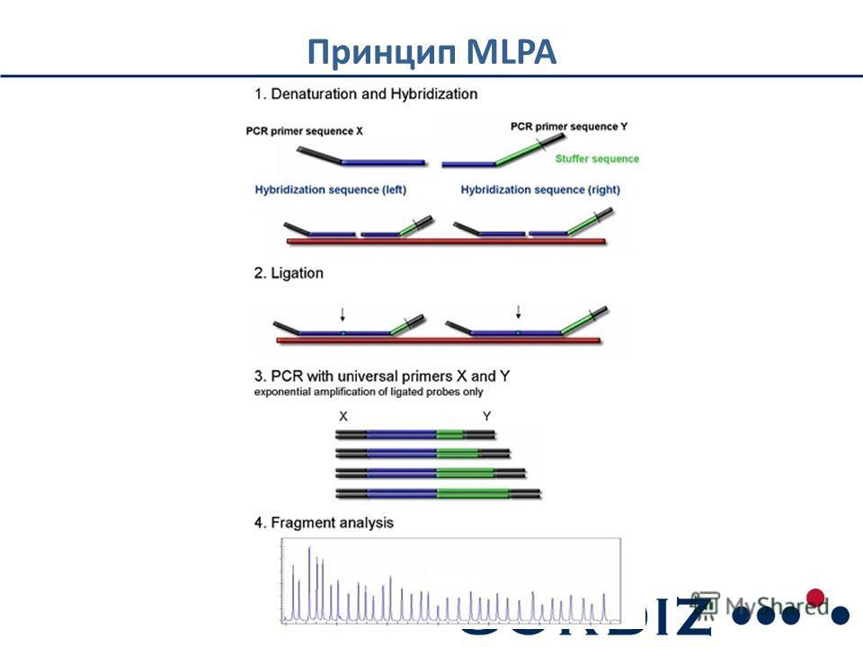 Принцип MLPA