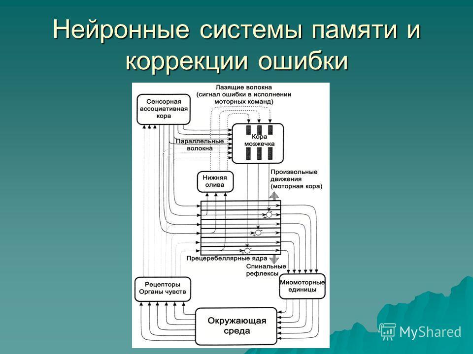 Нейронные системы памяти и коррекции ошибки