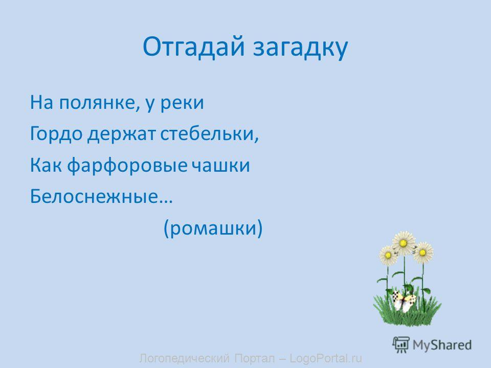 Отгадай загадку На полянке, у реки Гордо держат стебельки, Как фарфоровые чашки Белоснежные… (ромашки) Логопедический Портал – LogoPortal.ru