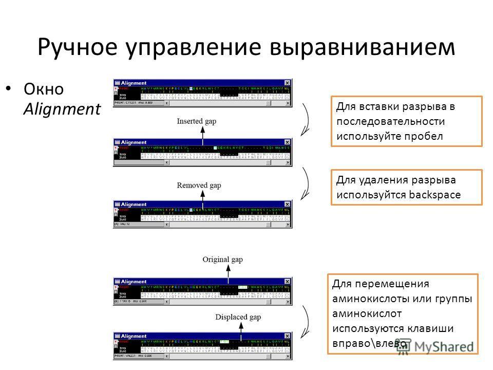 Ручное управление выравниванием Окно Alignment Для вставки разрыва в последовательности используйте пробел Для удаления разрыва используется backspace Для перемещения аминокислоты или группы аминокислот используются клавиши вправо\влево