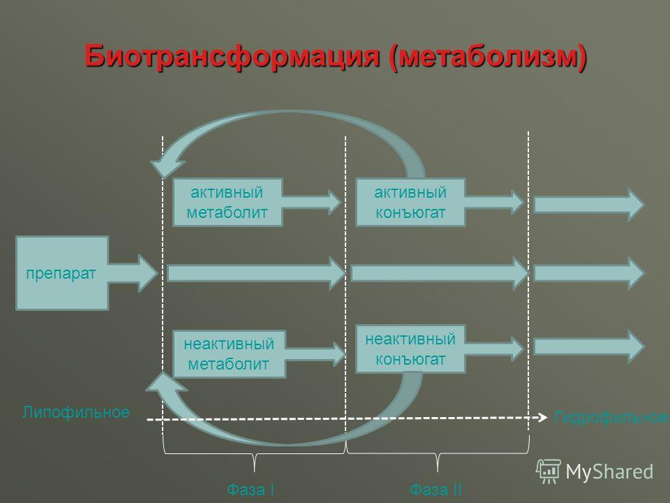 Биотрансформация (метаболизм) препарат Фаза IФаза II активный метаболит неактивный метаболит активный конъюгат неактивный конъюгат Липофильное Гидрофильное