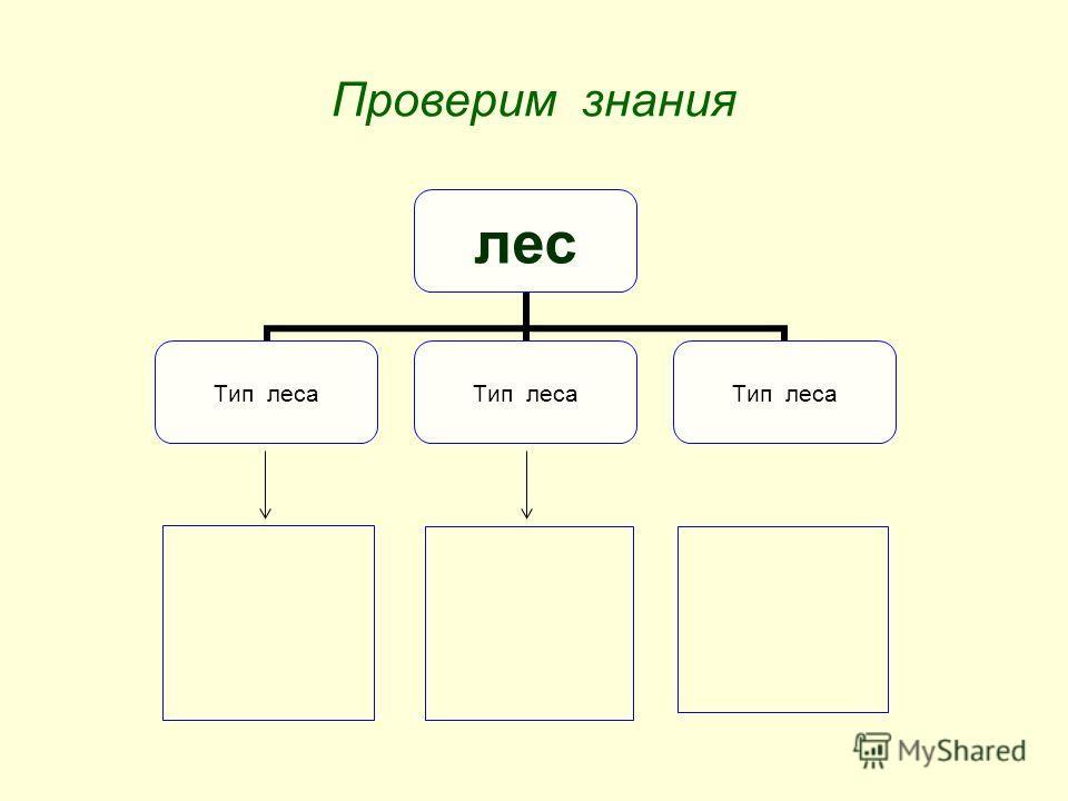 Проверим знания лес Тип леса
