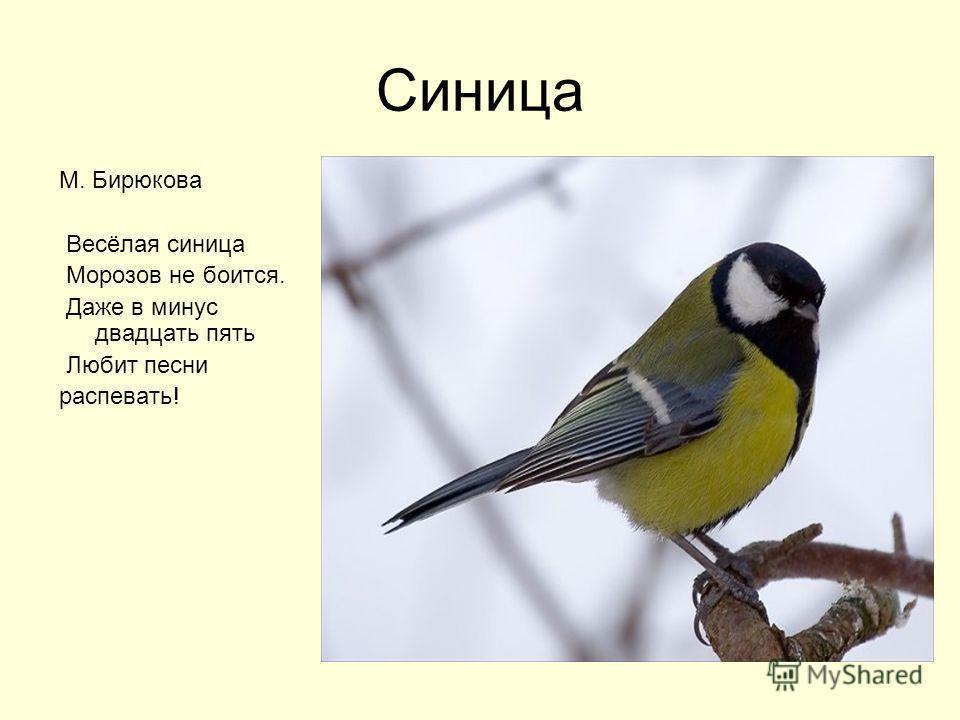 Синица М. Бирюкова Весёлая синица Морозов не боится. Даже в минус двадцать пять Любит песни распевать!