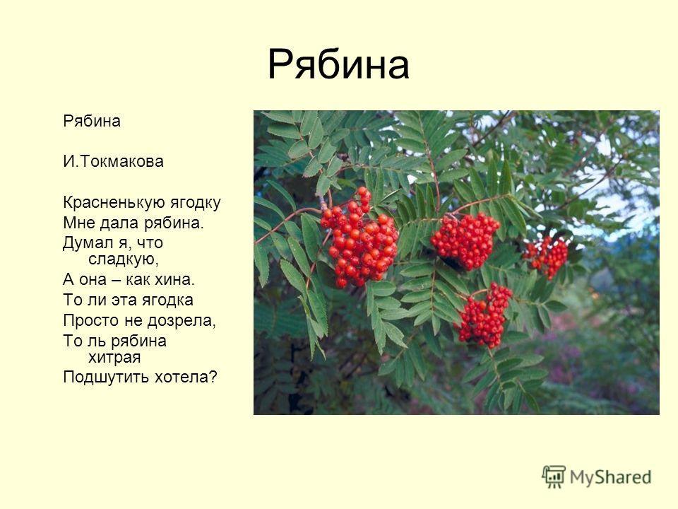 Рябина И.Токмакова Красненькую ягодку Мне дала рябина. Думал я, что сладкую, А она – как хина. То ли эта ягодка Просто не дозрела, То ль рябина хитрая Подшутить хотела?