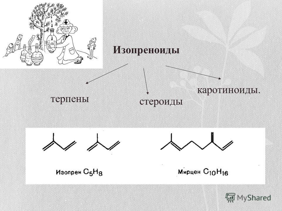 Изопреноиды терпены стероиды каротиноиды.