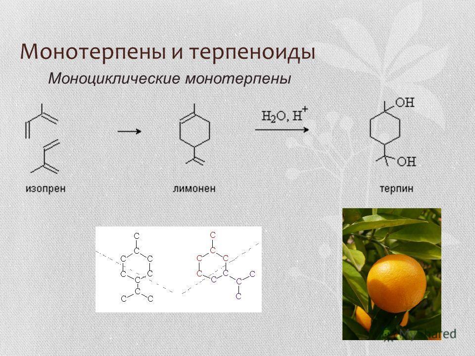 Монотерпены и терпеноиды Моноциклические монотерпены