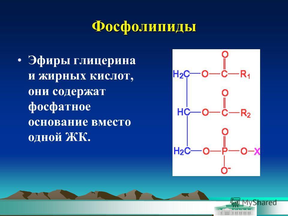 Фосфолипиды Эфиры глицерина и жирних кислот, они содержат фосфатное основание вместо одной ЖК.