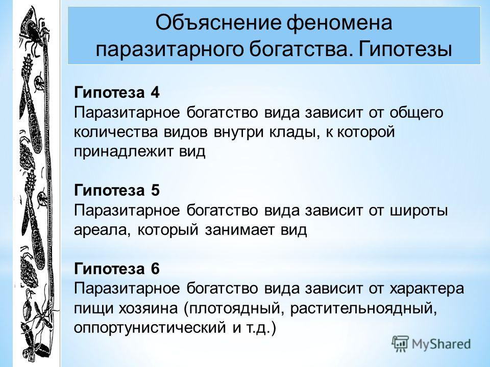 Объяснение феномена паразитарного богатства. Гипотезы Гипотеза 4 Паразитарное богатство вида зависит от общего количества видов внутри клады, к которой принадлежит вид Гипотеза 5 Паразитарное богатство вида зависит от широты ареала, который занимает