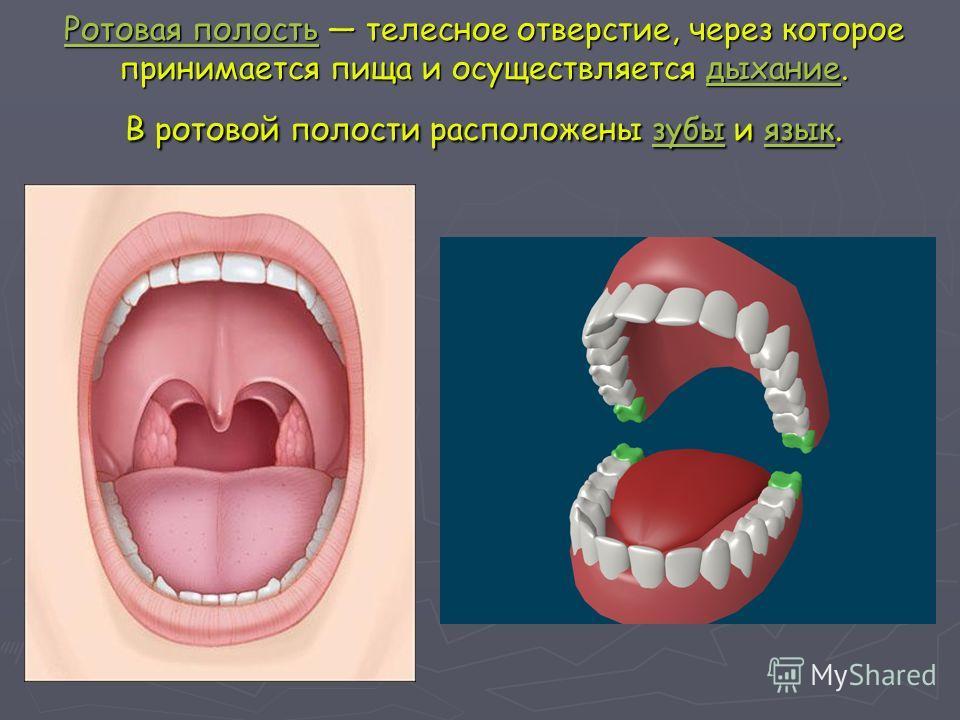 Ротовая полость Ротовая полость телесное отверстие, через которое принимается пища и осуществляется дыхание. В ротовой полости расположены зубы и язык. дыханиезубыязык Ротовая полость дыхание зубы язык