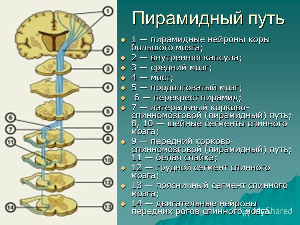 Система Пирамидная фото