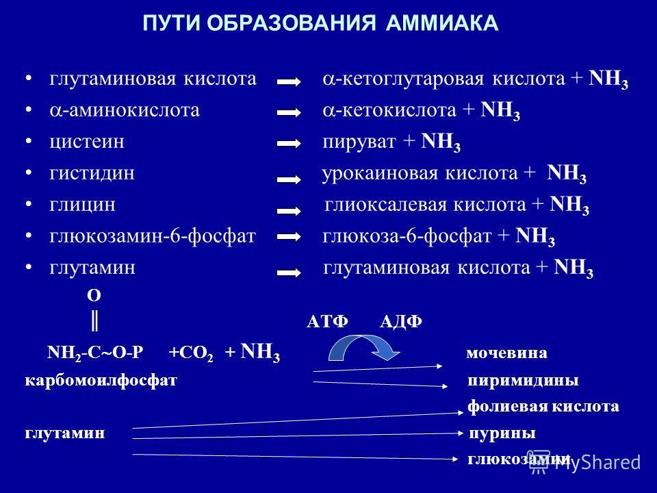 ПУТИ ОБРАЗОВАНИЯ АММИАКА глутаминовая кислота -кетоглутаровая кислота + NH 3 -аминокислота -кетокислота + NH 3 цистеин пируват + NH 3 гистидин урокаиновая кислота + NH 3 глицин глиоксалевая кислота + NH 3 глюкозамин-6-фосфат глюкоза-6-фосфат + NH 3 г