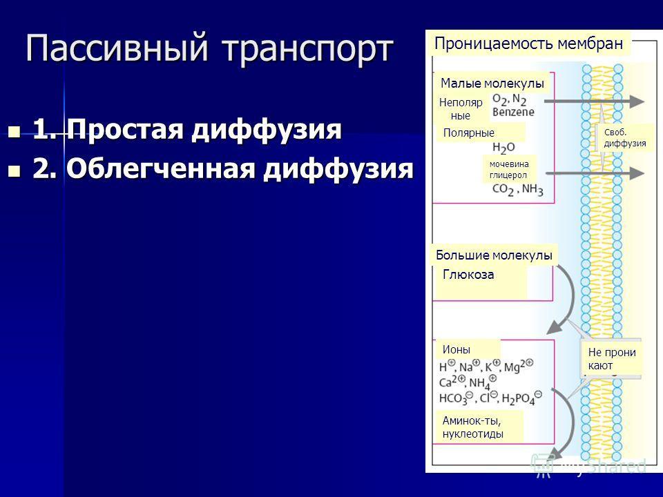 Пассивный транспорт 1. Простая диффузия 1. Простая диффузия 2. Облегченная диффузия 2. Облегченная диффузия Проницаемость мембран Своб. диффузия Малые молекулы Неполяр ные Полярные Большие молекулы Глюкоза Ионы Аминок-ты, нуклеотиды Не прони кают моч