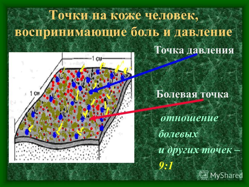 Точки на коже человек, воспринимающие боль и давление Точка давления Болевая точка отношение болевых и других точек – 9:1