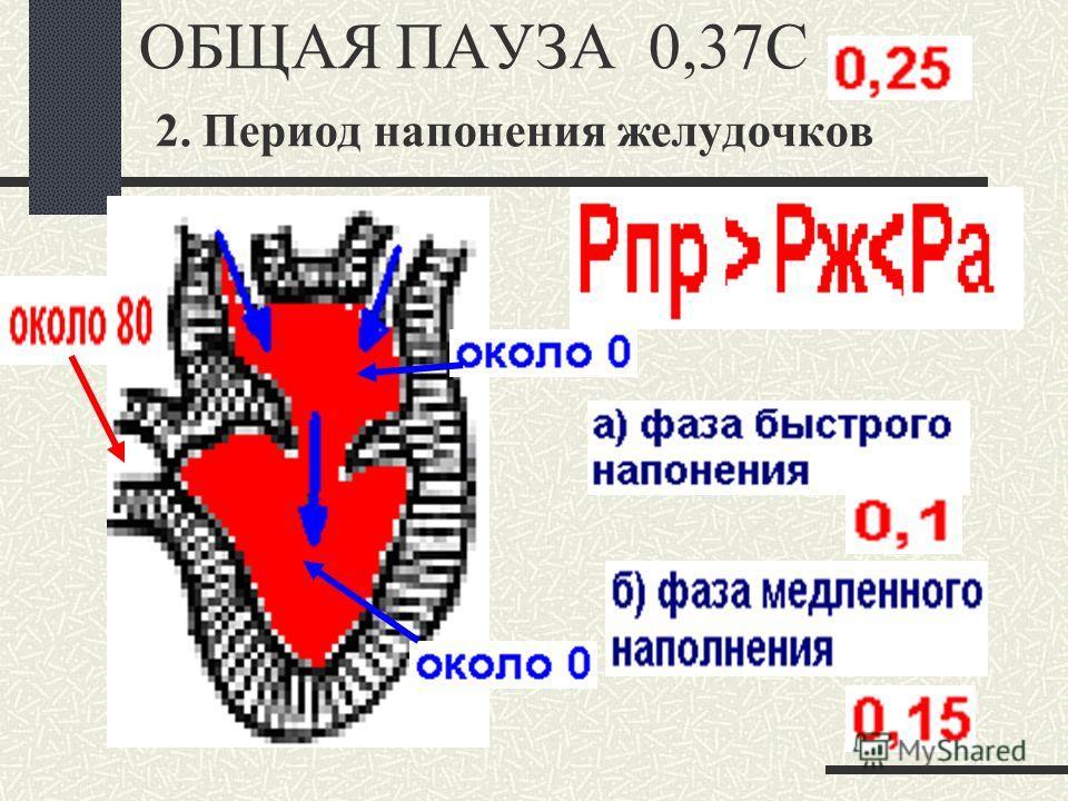ОБЩАЯ ПАУЗА 0,37С 2. Период напонения желудочков