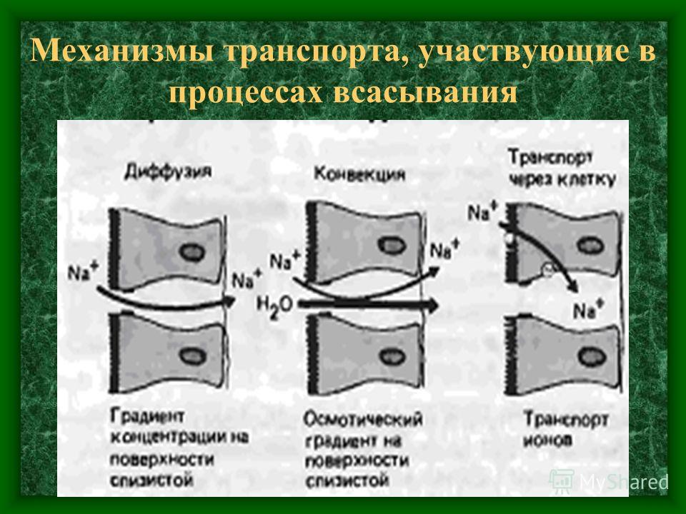 Механизмы транспорта, участвующие в процессах всасывания