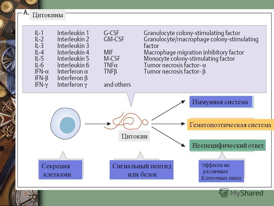 Цитокины Секреция клетками Сигнальный пептид или белок Эффекты на различных Клеточных типах Цитокин Иммунная система Гематопоэтическая система Неспецифический ответ