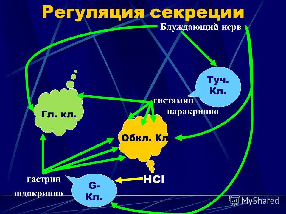 Регуляция секреции Гл. кл. Обкл. Кл. НCl Туч. Кл. гистамин G- Кл. гастрин Блуждающий нерв эндокринно паракринно