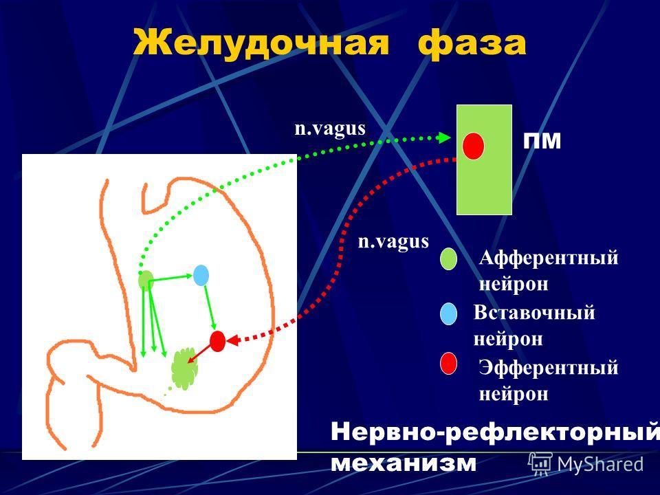 Желудочная фаза n.vagus ПМ Афферентный нейрон Вставочный нейрон Эфферентный нейрон Нервно-рефлекторный механизм