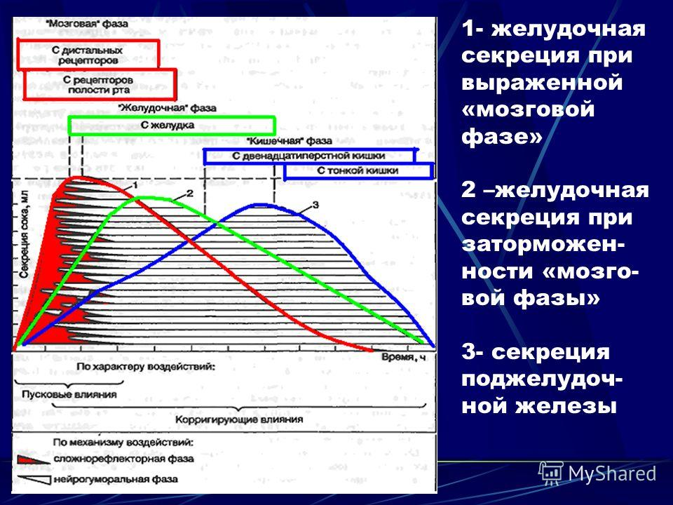 Схема фаз желудочной секреции