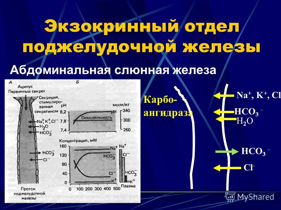 Экзокринный отдел поджелудочной железы Абдоминальная слюнная железа Na +, K +, Cl - HCO 3 - H2OH2O Cl - Карбо- ангидраза