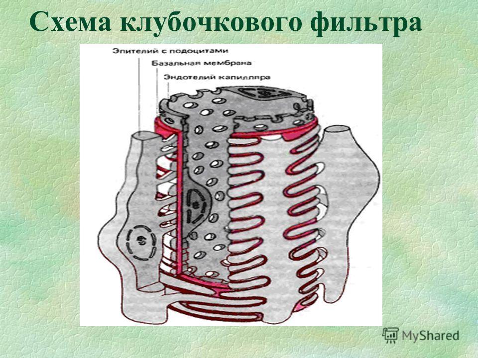 Схема клубочкового фильтра