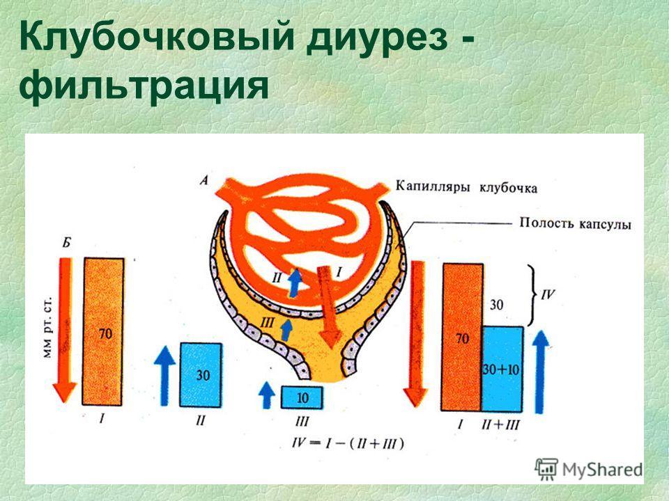 Клубочковый диурез - фильтрация