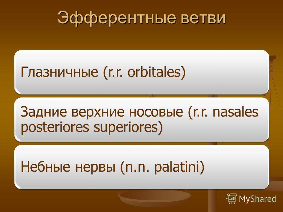 Эфферентные ветви Глазничные (r.r. orbitales) Задние верхние носовые (r.r. nasales posteriores superiores) Небные нервы (n.n. palatini)