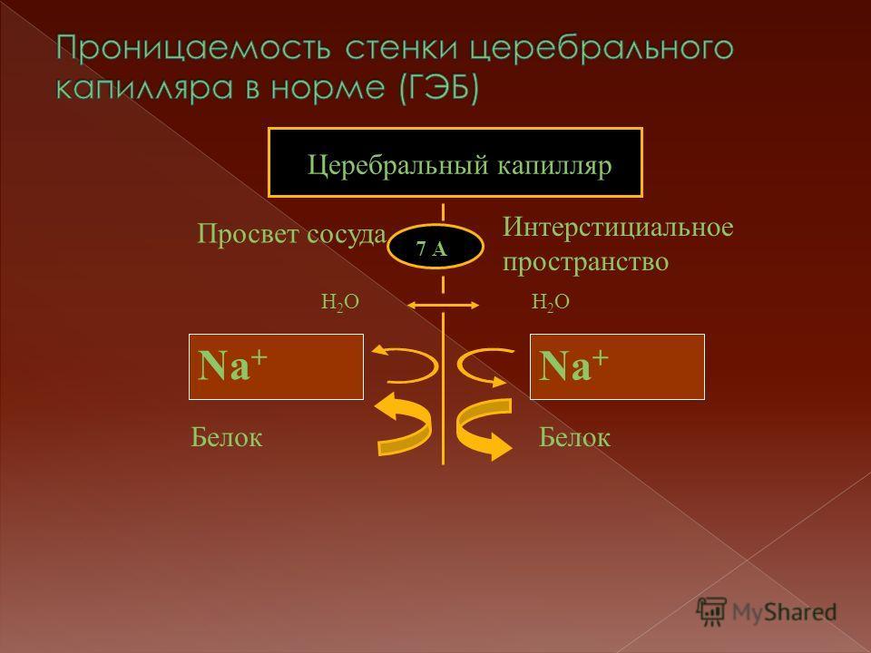 7 А Церебральный капилляр Интерстициальное пространство Просвет сосуда Белок Н2ОН2ОН2ОН2О Na +