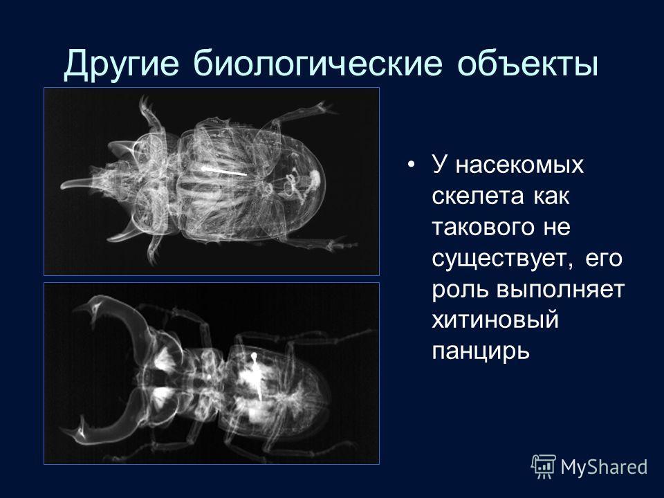Другие биологические объекты У насекомых скелета как такового не существует, его роль выполняет хитиновый панцирь