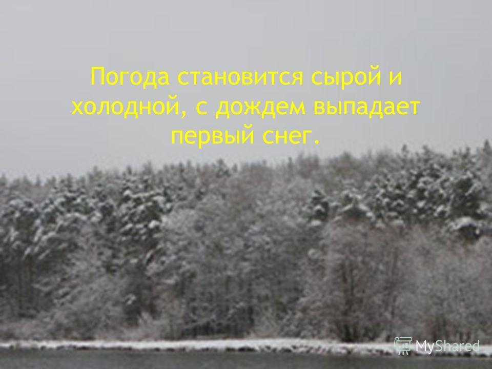 Погода становится сырой и холодной, с дождем выпадает первый снег.